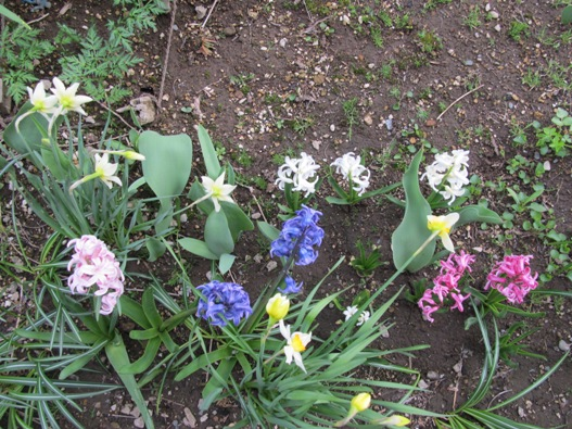 庭の花01.jpg