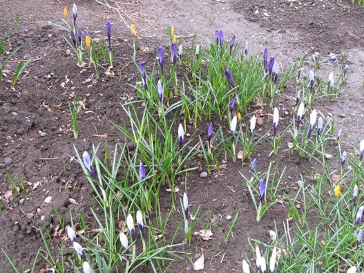庭の花02.jpg