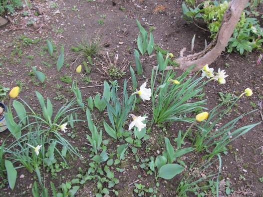 庭の花03.jpg