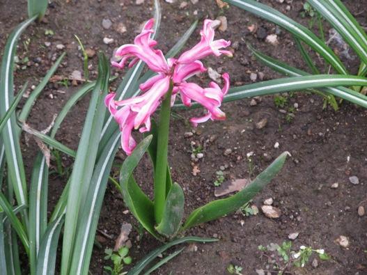 庭の花04.jpg