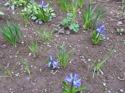庭の花05.jpg