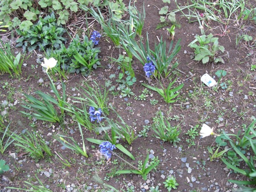 庭の花06.jpg
