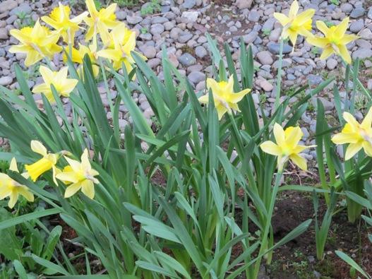 庭の花07.jpg