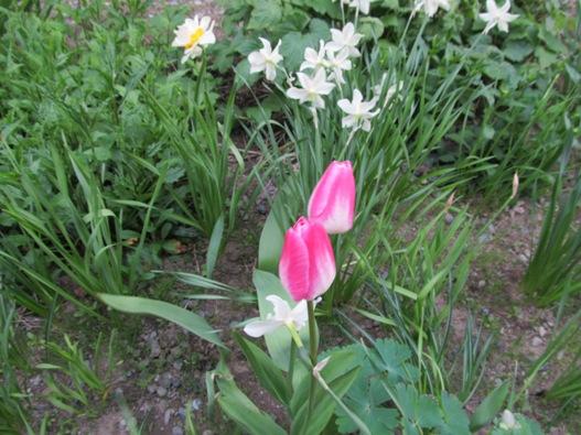 庭の花08.jpg