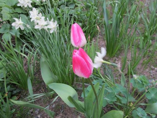 庭の花09.jpg