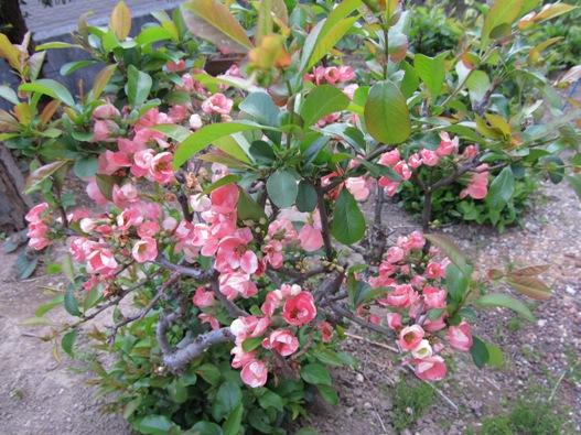 庭の花10.jpg