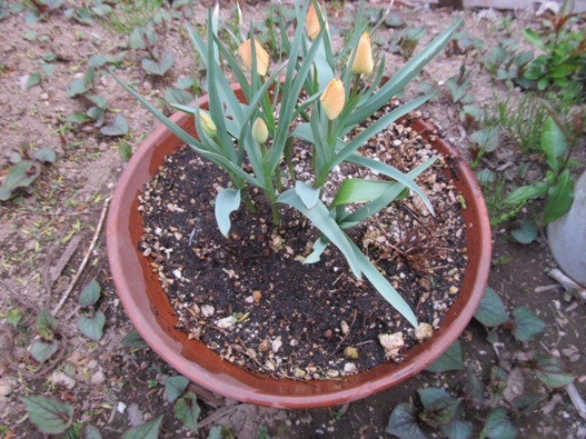 庭の花11.jpg