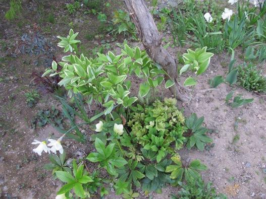 庭の花12.jpg