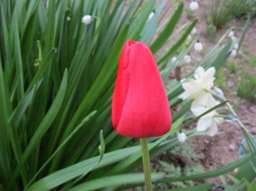 庭の花13.jpg
