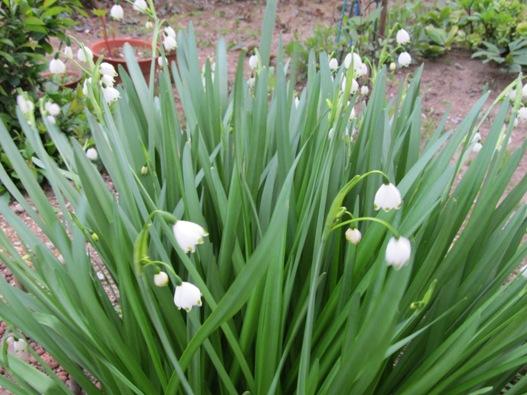 庭の花14.jpg