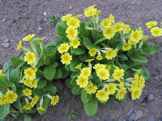 庭の花16.jpg