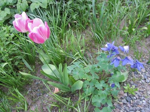 庭の花20.jpg